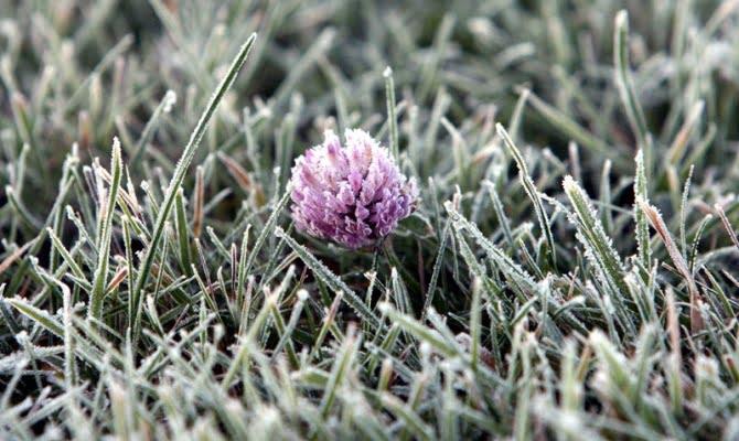 В Челябинской области грядут первые заморозки