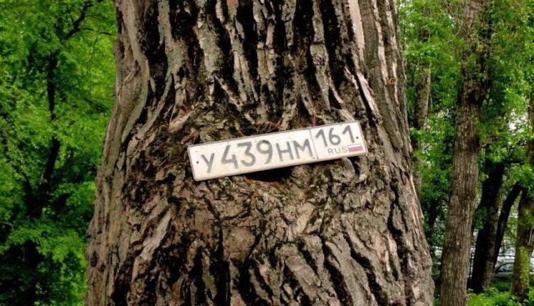 В Челябинске пересчитают деревья и кусты
