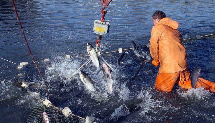 Южноуральская власть борется за «рыбные места»