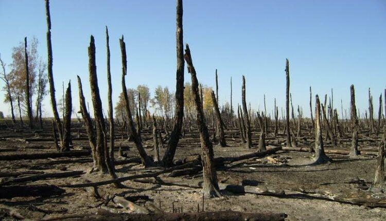 Пожары на Южном Урале – в прицеле Генпрокуратуры