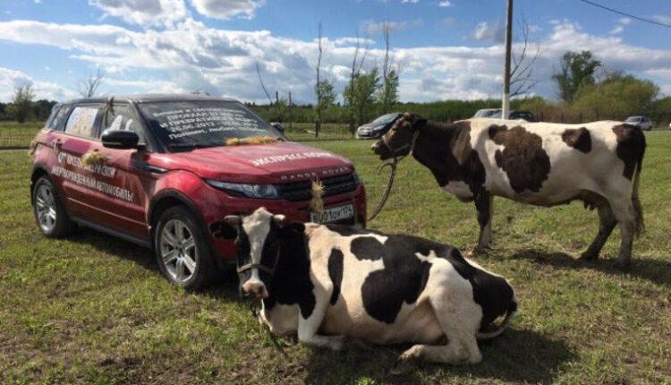 Жительница Магнитогорска запрягла в Range Rover коров