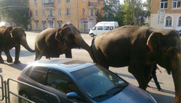 Завтра в Челябинске – парад слонов