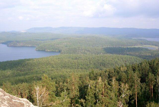 Лесничего на Южном Урале поймали на взятке и торговле лесами