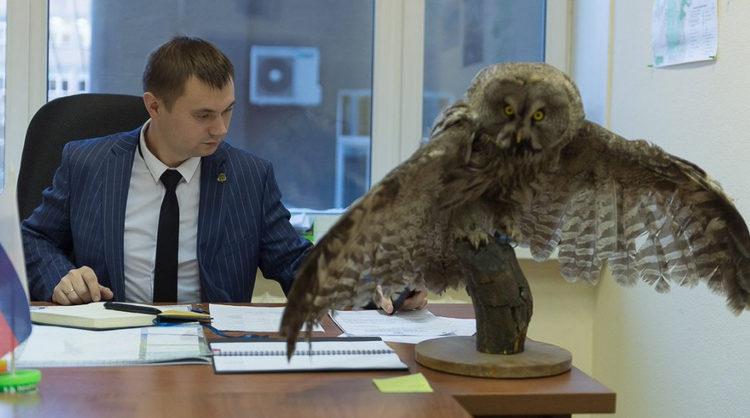 Челябинского чиновника Минэкологии высмеяли на передаче Урганта из-за стоящего на его столе чучела краснокнижной совы. ВИДЕО