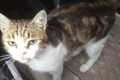 В Подмосковье кот-наркокурьер скрылся от следствия