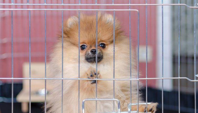 «Без права выгула». Вернувшуюся из Таиланда собаку посадили на карантин вместе с хозяином