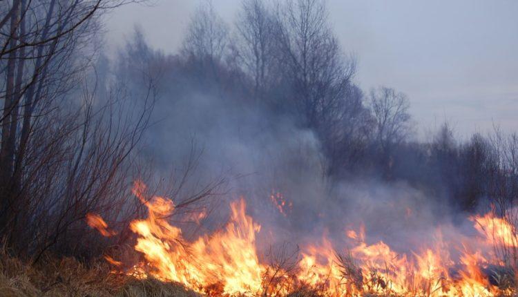 «Нам совершенно не до того, чтобы помимо вируса этим заниматься». Губернатор Забайкалья отказался выплачивать компенсации пострадавшим от лесных пожаров