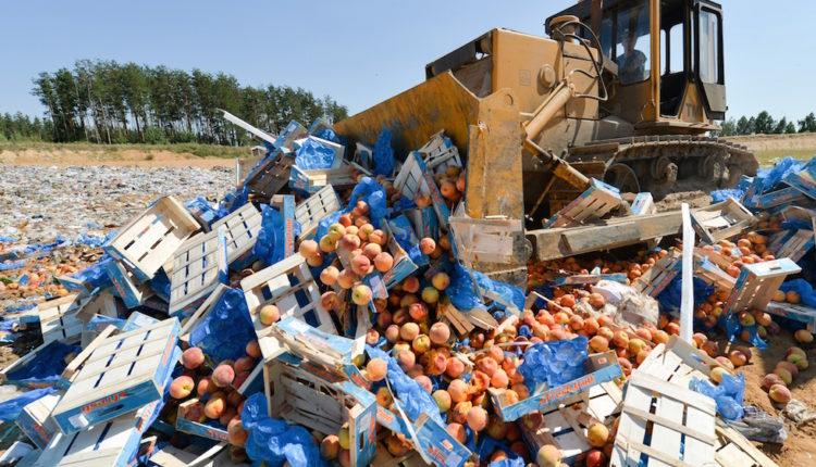 Россия уничтожила более 36 тысяч тонн санкционных продуктов за пять лет